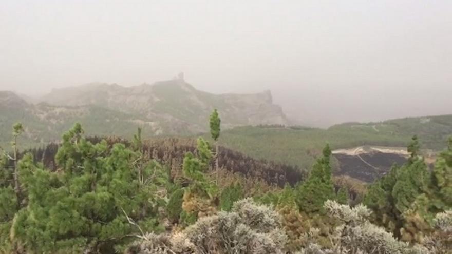 Vistas de los efectos del incendio desde el Pico de Las Nieves