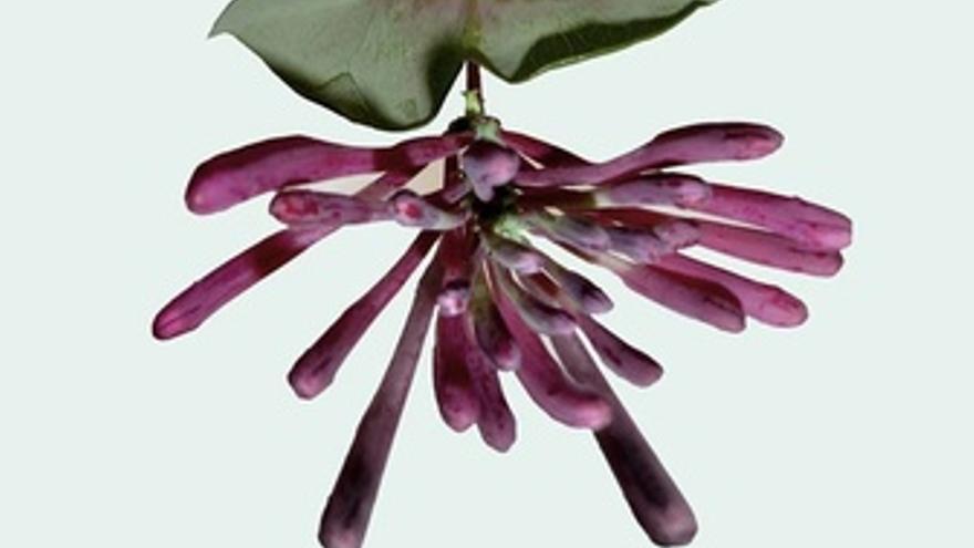 Botanical slide show de Rosemarie Trockel