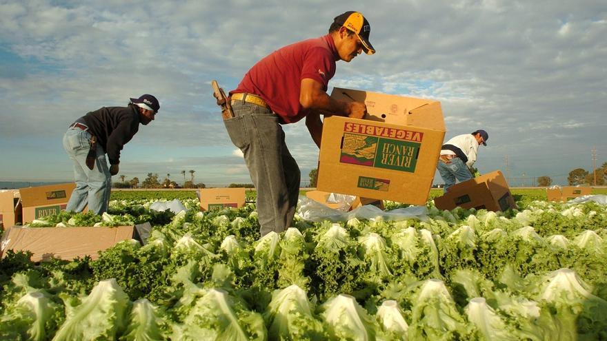 Mexicanos trabajan el campo en Puerto Rico ante la falta de mano de obra local