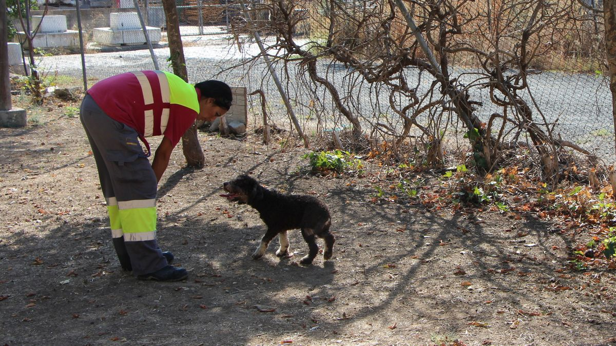 Una trabajadora del Zoosanitario en la zona de las perreras.