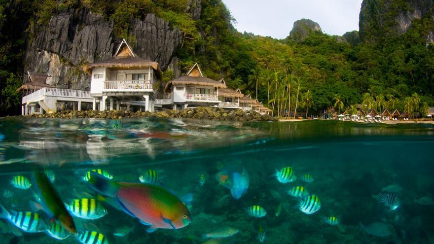 Un banco de peces de colores