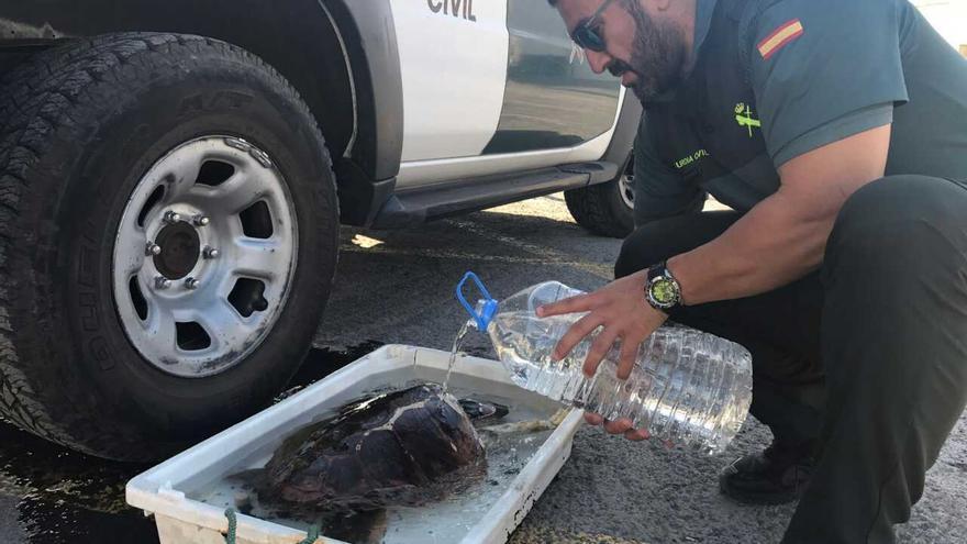 La tortuga hallada con lesiones, junto al guardia civil que la atendió