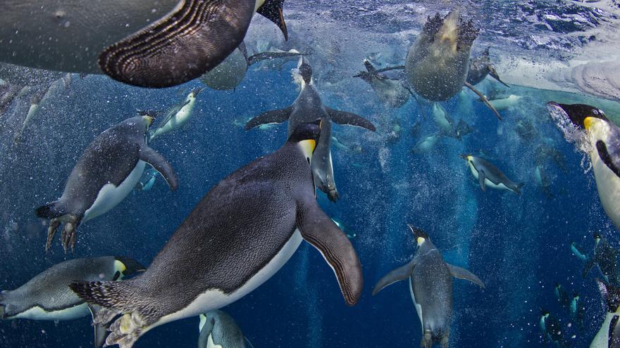 Primer premio en la categoría de naturaleza / Paul Nicklen