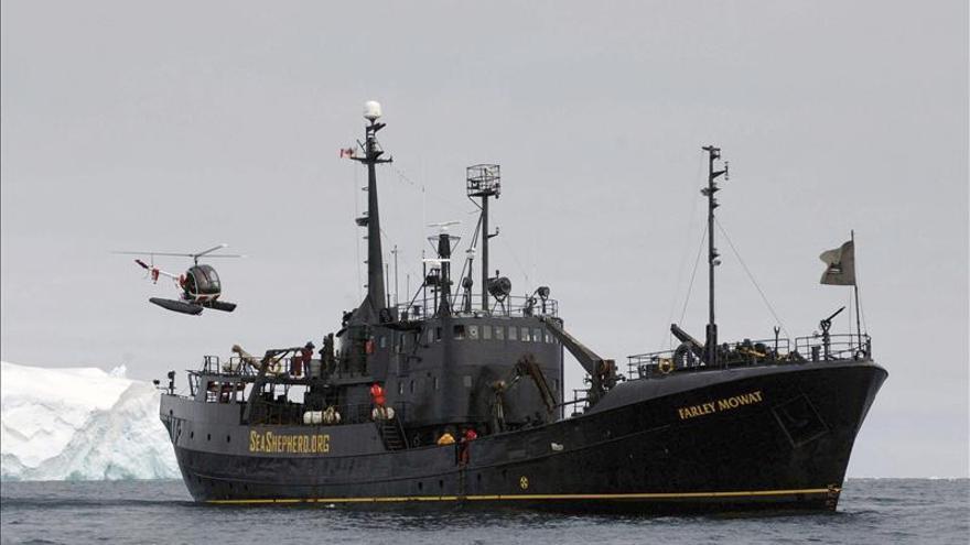 Sea Shepherd intercepta a balleneros japoneses en la Antártida