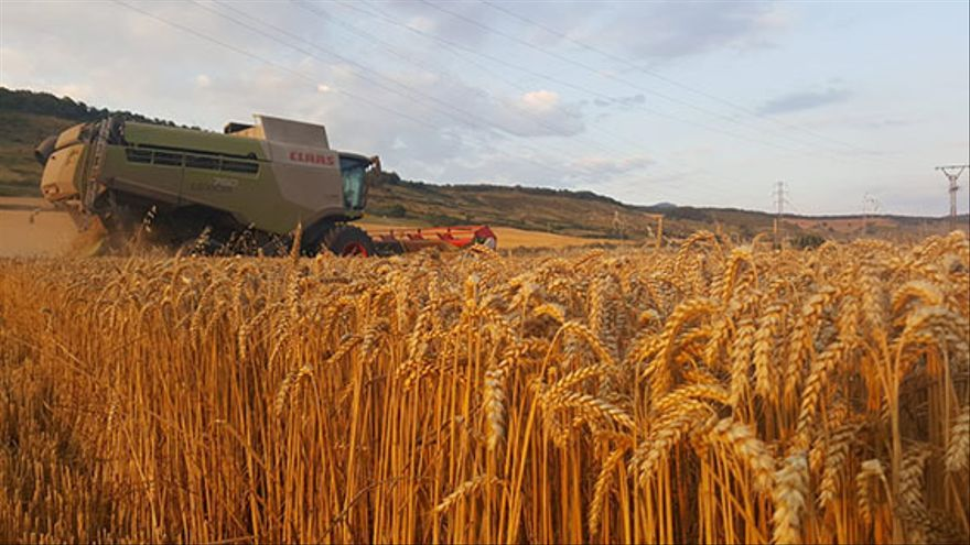 Campo de cereal en Monreal