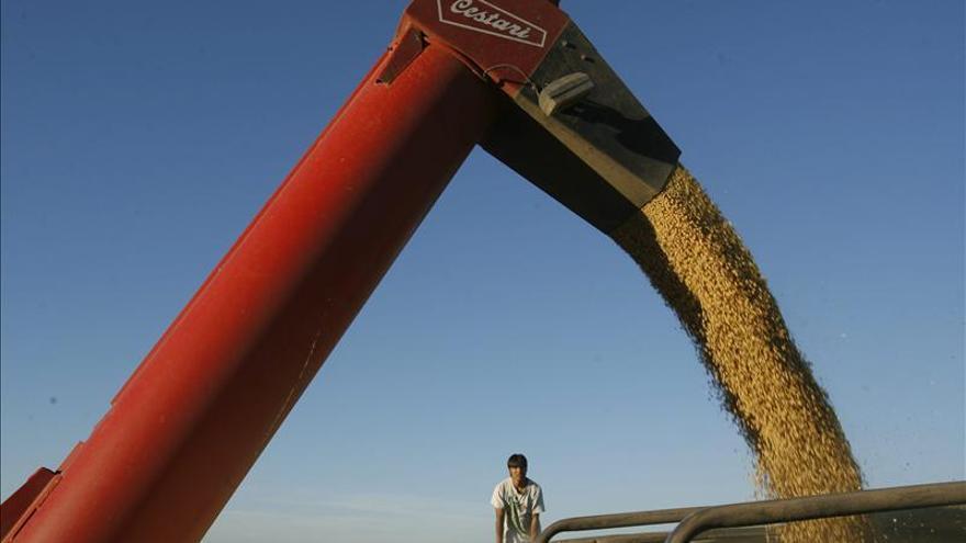 Brasil investiga el desarrollo de una soja transgénica resistente a la sequía