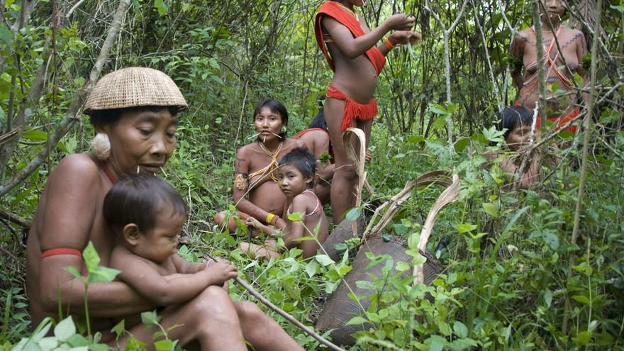 Grupo de mujeres y niños yanomamis en la Amazonia brasileña. En Brasil viven más pueblos indígenas aislados que en cualquier otro lugar del planeta. Dependen por completo de su selva para sobrevivir, pero la mayor parte está siendo arrasada por la tala, la agroganadería, las megapresas, las carreteras o las exploraciones de hidrocarburos. COPYRIGHT © Survival / www.survival.es