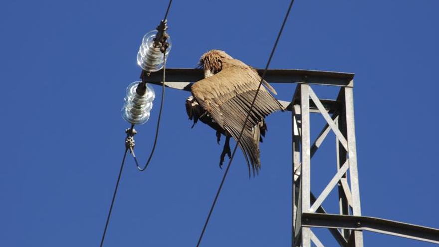 """La Guardia Civil localiza 120 aves electrocutadas en la """"Operación Fulgor"""""""
