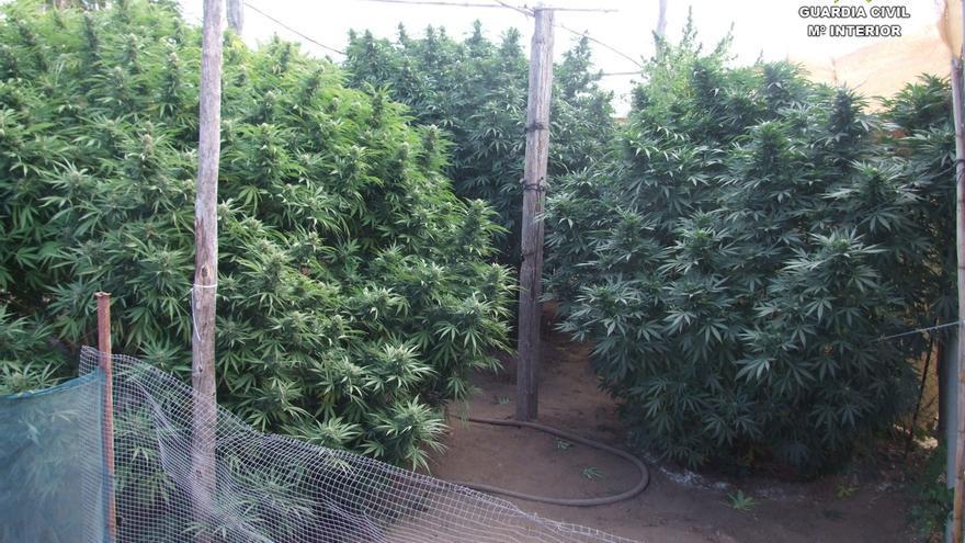 Las drogas se contabilizarán como importación, excepto las plantaciones locales de Marihuana