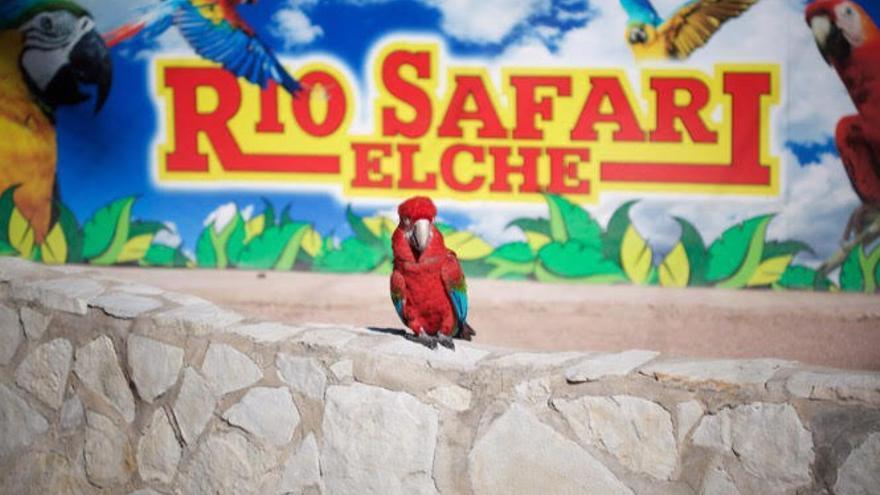 Uno de los guacamayos del zoo Río Safari Elche, usado como reclamo fotográfico