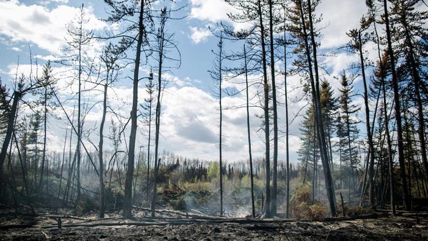 """La actividad humana, causa """"probable"""" del incendio de Fort McMurray (Canadá)"""