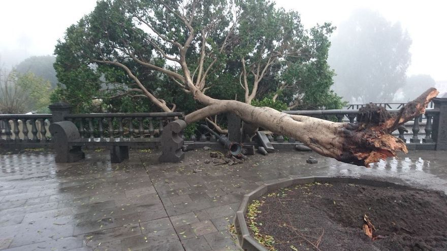 Caída de un árbol en Santa Lucía