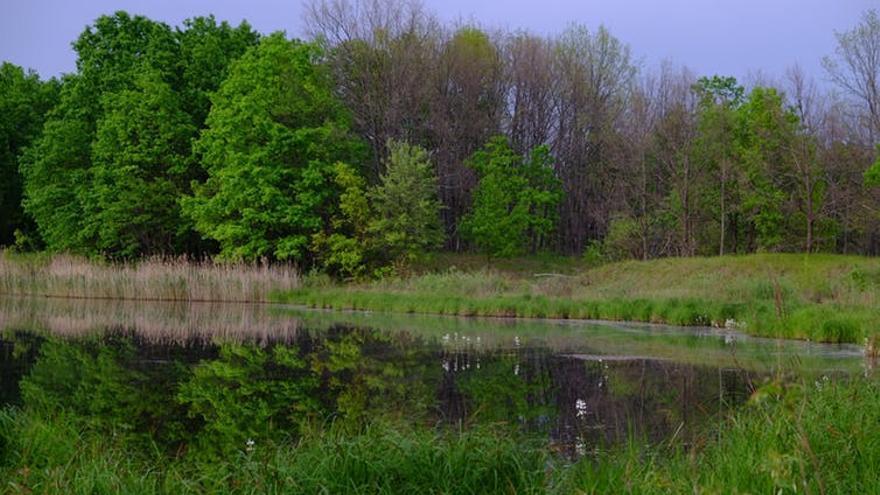 Campiña y bosque de ribera dentro de la zona de exclusión de Chernóbil (Ucrania). Mayo de 2016