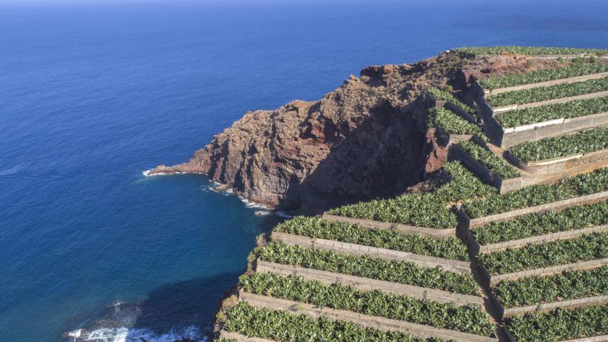 Cultivo costero del plátano en bancales, en la isla de La Palma