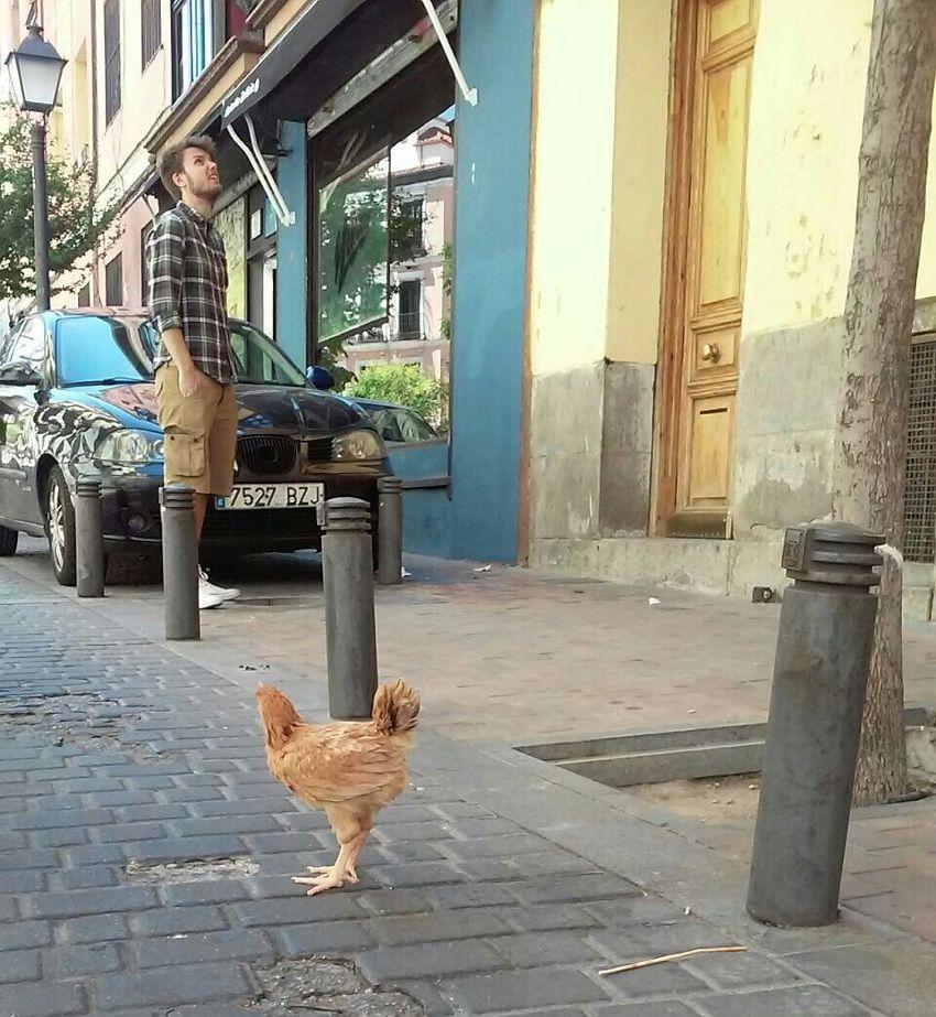 Pollo paseando por la calle Tesoro | Foto: Petra Sokolíková
