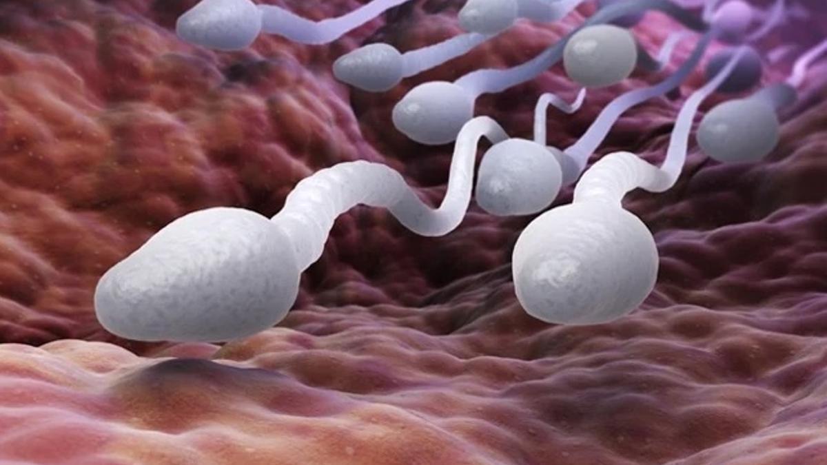 Espermatozoides viajando por un conducto vaginal.