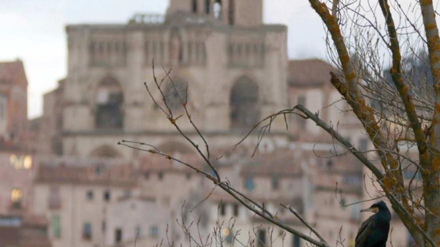 El estudio supone el primer inventario de fauna de la ciudad de Cuenca