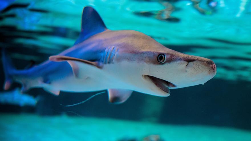 """Experta en tiburones advierte del impacto """"devastador"""" en la biodiversidad marina"""