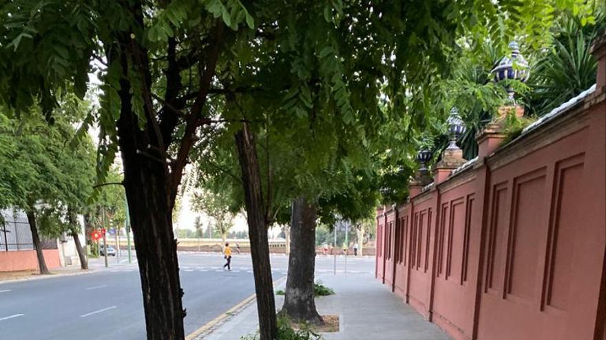 Árboles detrás de San Telmo /Paco Casero