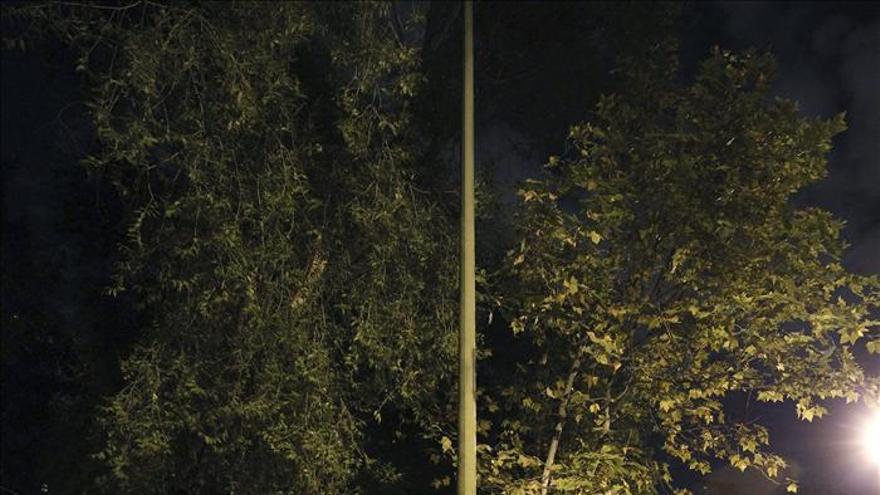 Fallece un hombre de 72 años en Madrid golpeado por la rama de un árbol