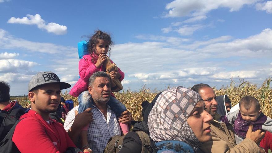 Cientos de refugiados escapan del control policial escondiéndose entre los maizales que rodean el campo de Roezske / Olga Rodríguez