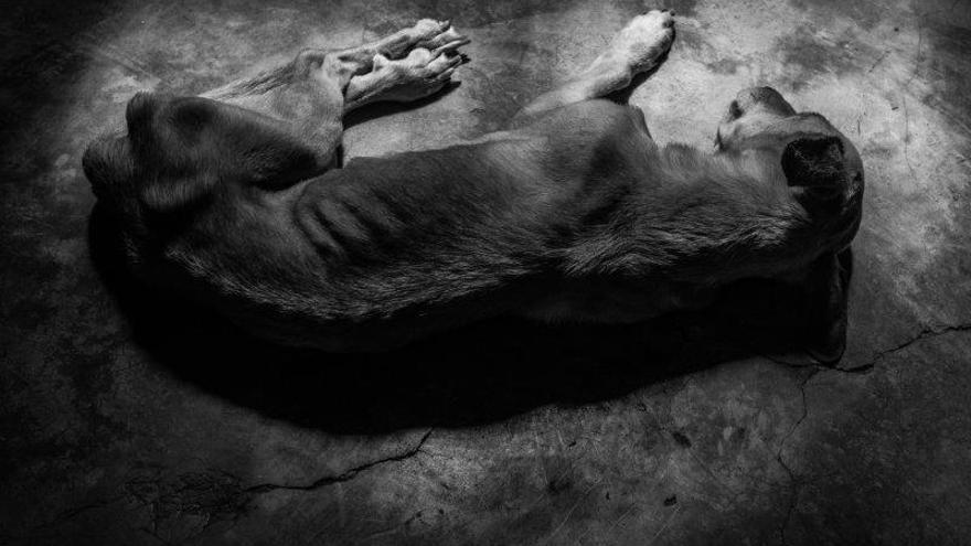 Un perro hambriento descansa sobre el suelo. Foto: Ignacio Marín