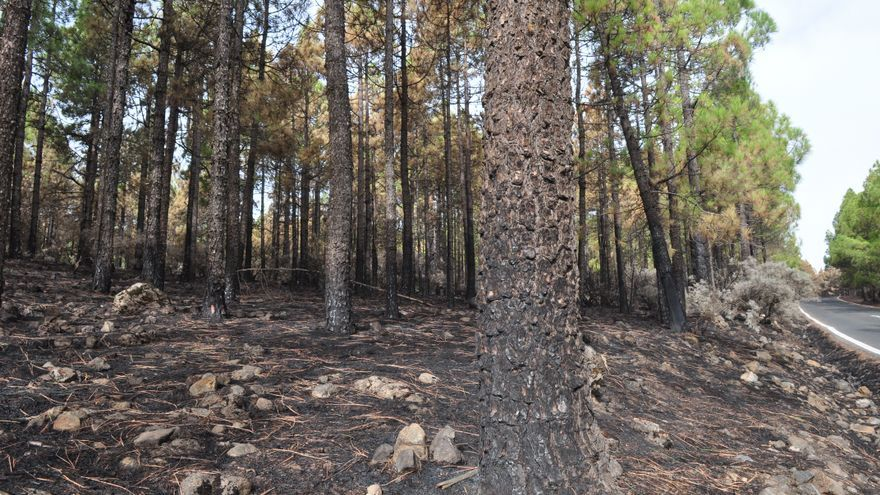 Efectos del incendio en Gran Canaria. (Ángel Sarmiento).