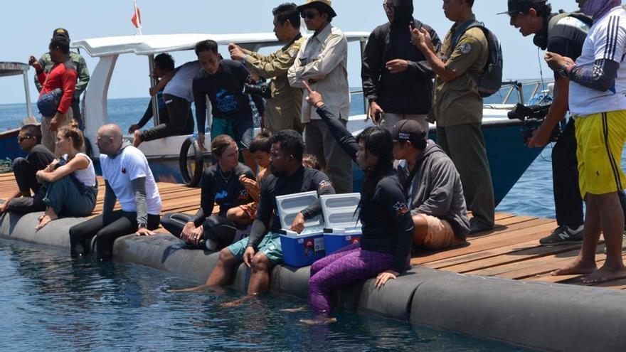 Momento en el que uno de los delfines es liberado en el santuario de Bali