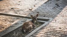 Durante la pandemia los animales han vivido sin miedo a los humanos