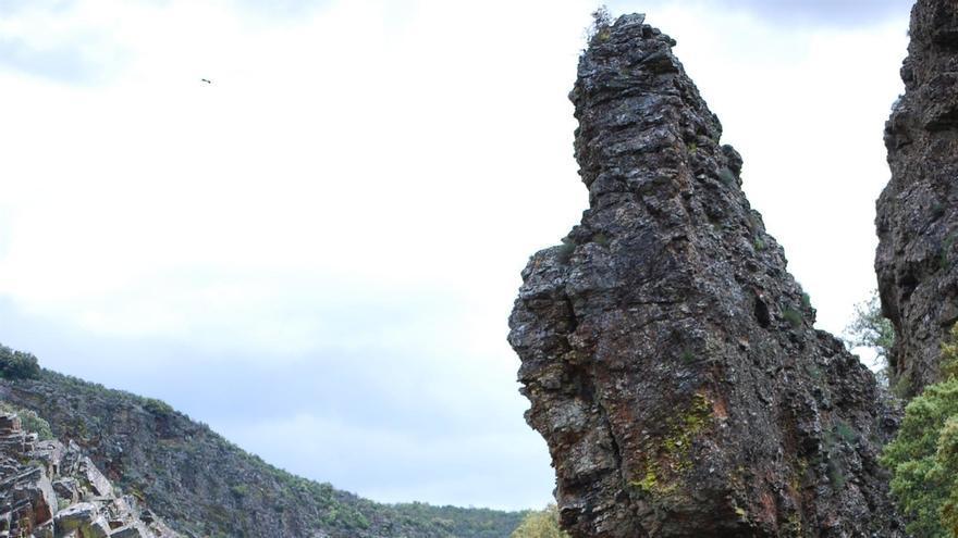Cazadores piden al Gobierno que modifique la Ley de Parques Nacionales para permitir la caza en Monfragüe y Cabañeros