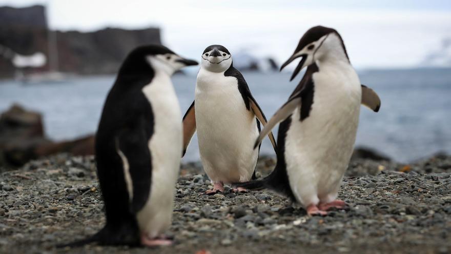 Un récord de 2.567 pingüinos fueron rescatados en playas de Brasil en seis meses
