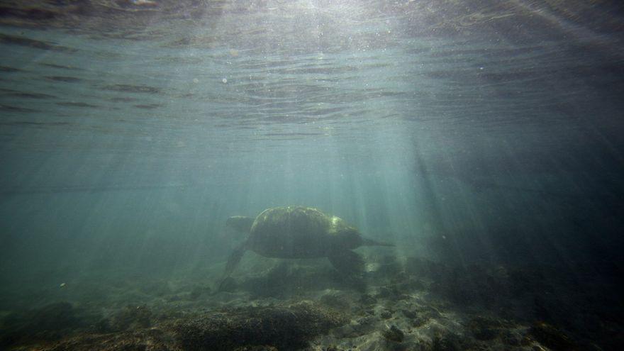 Tenerife defiende el impulso de reservas marinas como las de Anaga y Teno para garantizar la conservación del litoral de la isla