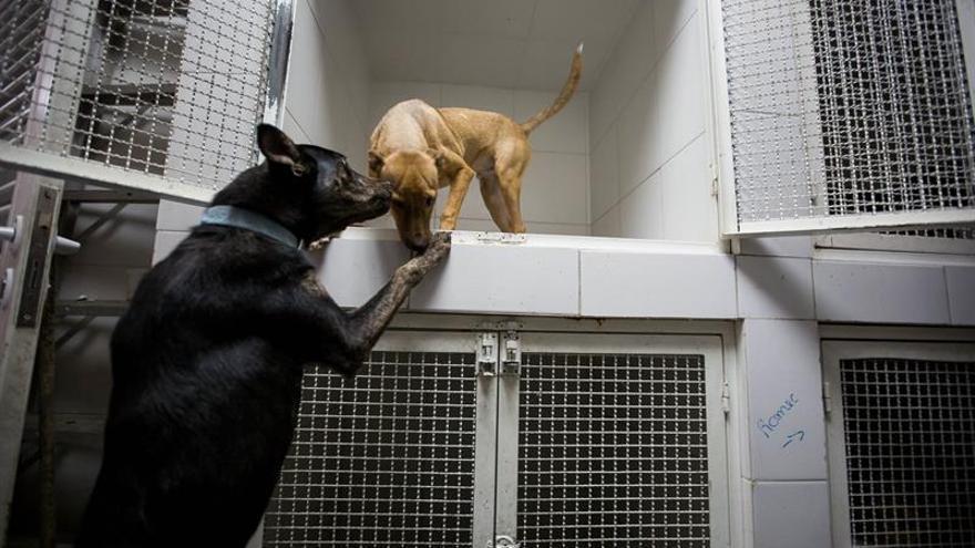 Escasez de medicamentos en Venezuela también afecta a la salud de los perros