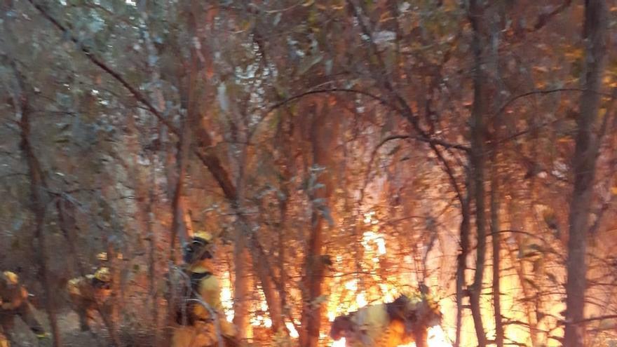 El Infoca da por extinguido el incendio en un paraje de Almonte, que se queda en un conato
