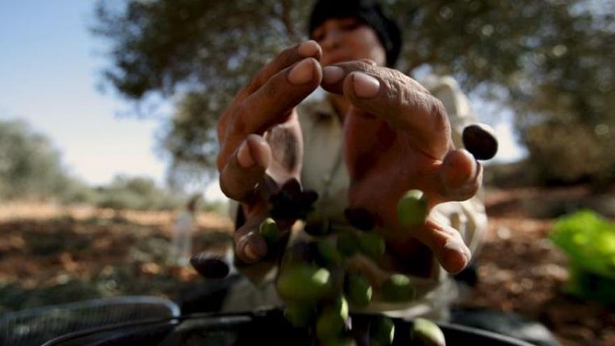 Las mujeres tienen menos acceso a recursos agrícolas que los hombres / EFE