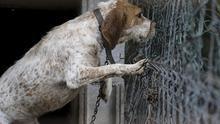 """""""Promoviendo el Veganismo"""" denuncia la situación en la que se encuentran los perros de caza en el Pirineo aragonés."""