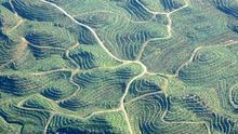 Indonesia detiene las concesiones para el aceite de palma durante 3 años