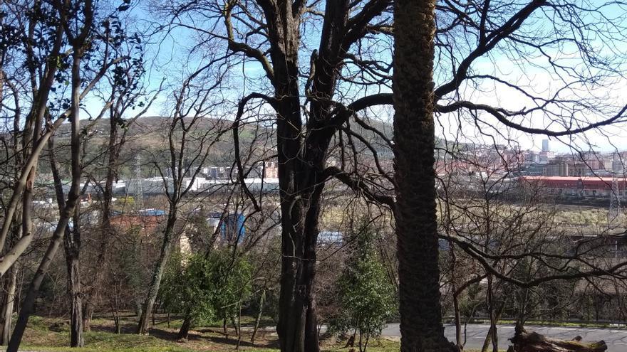 Archivo - Bosque con árboles en Euskadi (archivo).