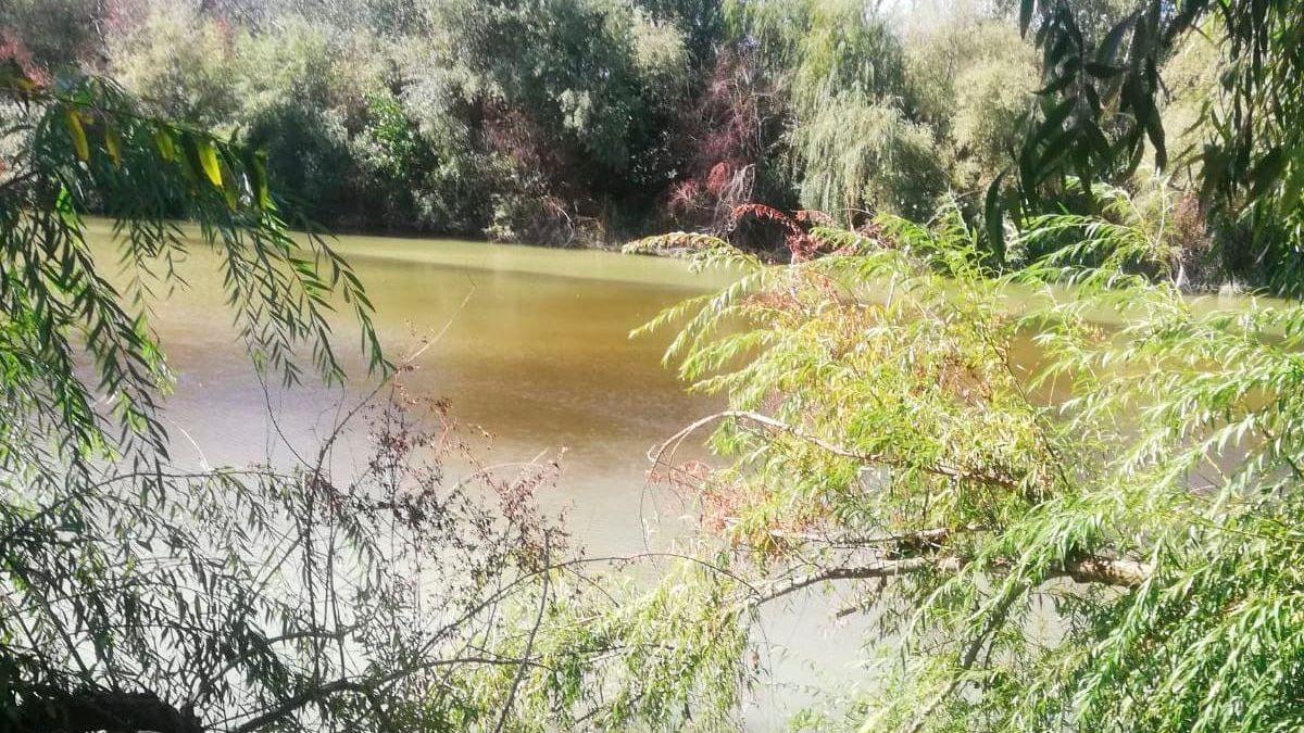 Tramo del Guadalquivir en Pedro Abad con proliferación de algas