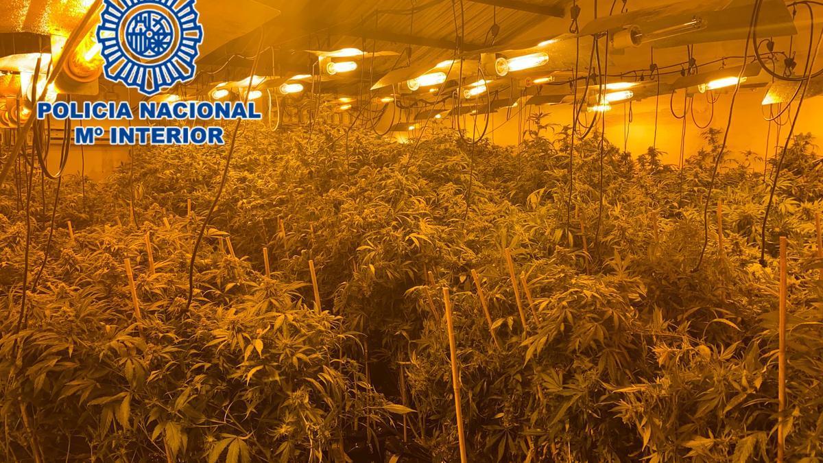 Panorámica de la plantación de droga