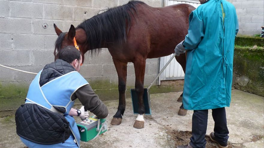 Tratamiento veterinario a un caballo. | MADERO CUBERO