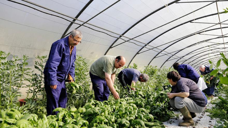 Personas en exclusión social trabajando en el invernadero de Karabeleko. Foto: Karabeleko.