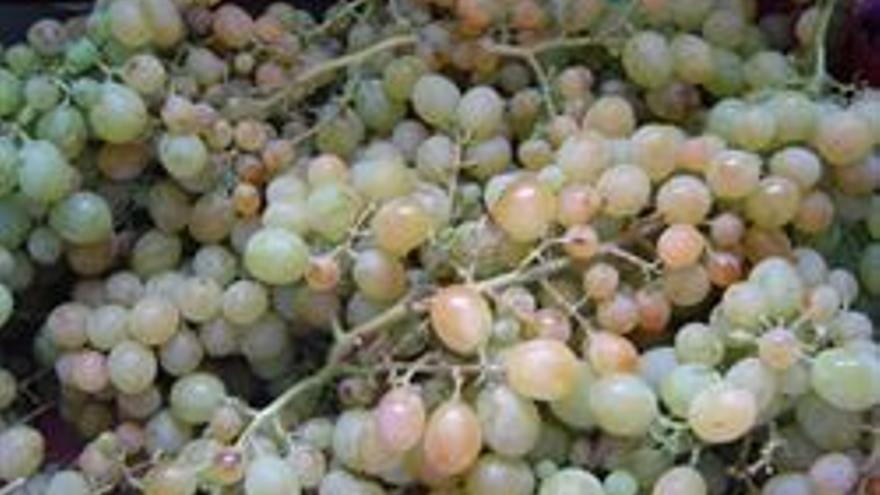 Unión de Uniones denuncia que las empresas compradoras de uva y vino están incumpliendo los plazos de pago a productores
