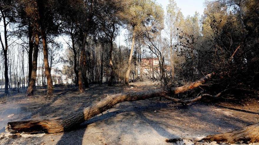 Incendio forestal ya ha arrasado más de 100 hectáreas entre Ceuta y Tánger