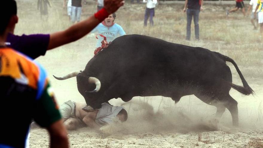 Tordesillas sustituye el Toro Vega por el Toro de la Peña sin lidia ni muerte