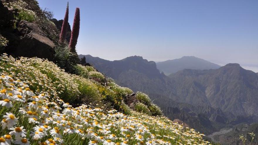 Imagen de los bordes de la Caldera en la primavera de 2014. Foto: ÁNGEL PALOMARES.
