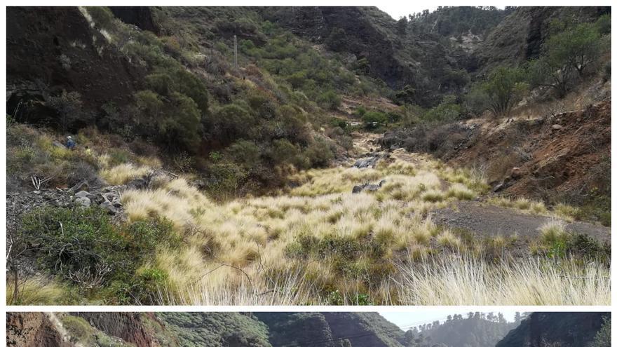 Antes y después del plan de control del rabo de gato (Pennisetum setaceum)