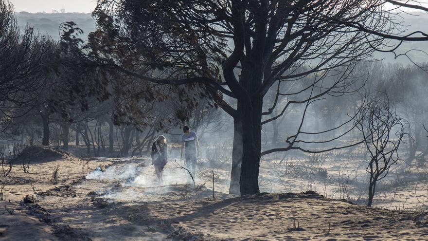 Zona arrasada por las llamas del incendio de Doñana en el municipio de Mazagón