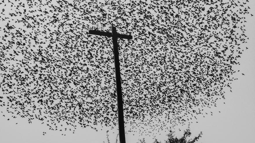 'Pájaros en el poste'. Carretera a Guanajuato, México. 1990.