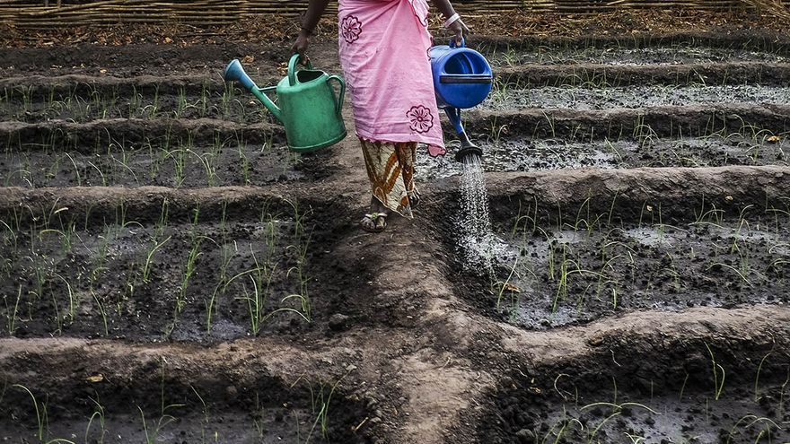 Imagen de un reportaje de 'Calamar2' sobre Yaya Balde en Guinea Bissau / Foto: Pedro Armestre.